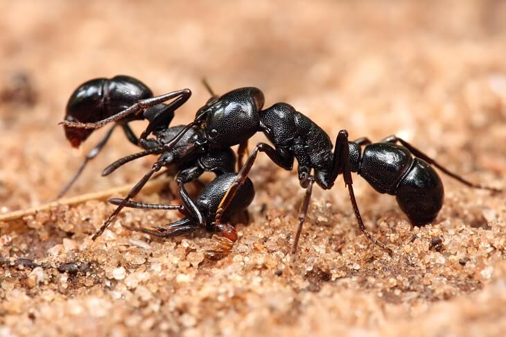 How To Get Rid Of Ants In Car?