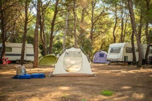 Campgrounds in the pine forest
