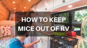 How To Keep Mice Out Of RV – 4 Simple Ways Without Spending A Penny