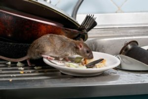 Mice can cause serious damage and annoyance to your RV